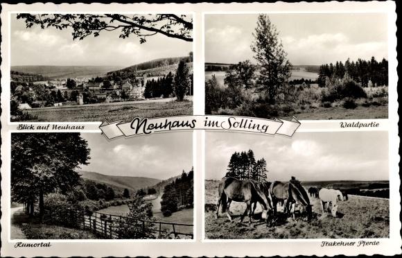 Ak Neuhaus im Solling Holzminden in Niedersachsen, Ansichten, Waldpartie, Trakehner Pferde, Rumortal