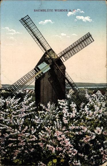 Ak Werder an der Havel, Baumblüte, Windmühle