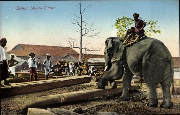 Ak Indien, Elephant stacking timber, Elefant stapelt Baumstämme, Arbeiter