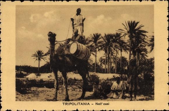 Ak Tripolitania Tripolis Libyen, Nell' oasi, Kamel, Oase, Palmen
