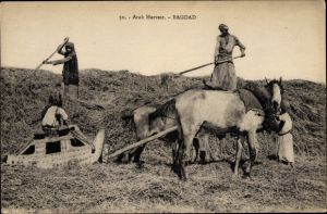Ak Bagdad Irak, Arab Harvest, Ernte, Feldarbeiter, Pferde