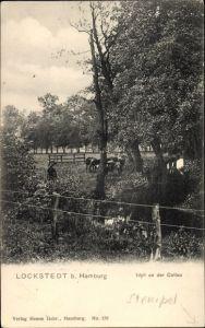 Ak Hamburg Eimsbüttel Lokstedt, Idyll an der Collau, Kühe auf der Weide