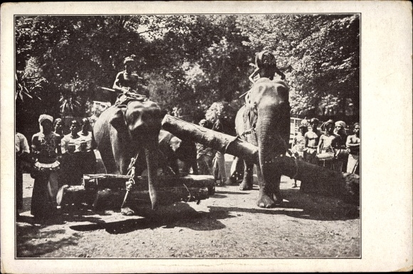 Ak John Hagenbeck's Ceylon, Völkerschau, Arbeitselefanten