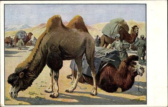 Künstler Ak Kamele, Wüstenkarawane, Meinholds Tierbilder
