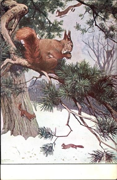 Künstler Ak Eichhörnchen auf einem Tannenzweig, Meinholds Tierbilder