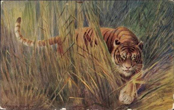 Künstler Ak Rankin, George, Tigress, Tiger, Raphael Tuck & Sons No. 8785