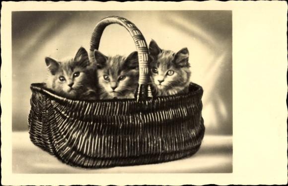 Ak Drei Katzen in einem Korb sitzend, Kätzchen