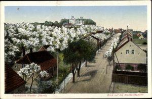 Ak Werder an der Havel, Baumblüte, Blick auf die Bismarckshöhe
