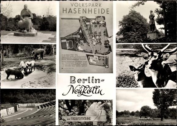 Ak Berlin Neukölln Rixdorf, Volkspark Hasenheide, Wildschweine, Hirsch, Denkmal, Freilichtbühne
