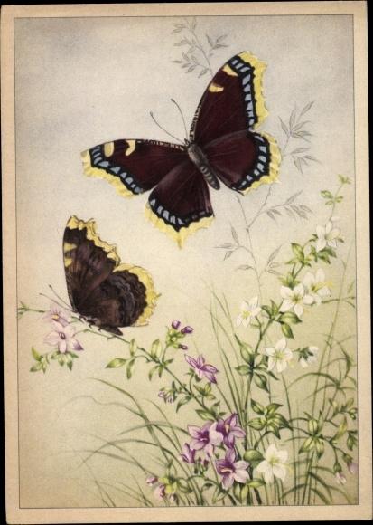 Künstler Ak Zwei Schmetterlinge, Schwarz gelbe Flügel