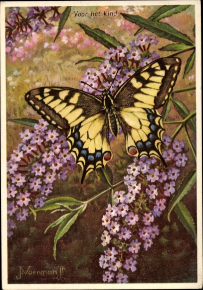 Künstler Ak Voerman, J., Schmetterling, Gelb schwarze Flügel, Voor her Kind