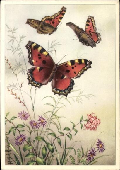 Künstler Ak Drei Schmetterlinge, Rot schwarz weiße Flügel