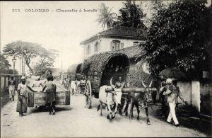 Ak Colombo Ceylon Sri Lanka, Charrette à boeufs, Rinderfuhrwerk