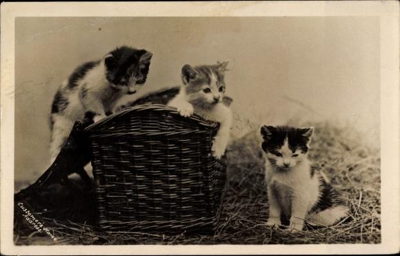 Ak Katzen in einem Korb sitzend, Kätzchen