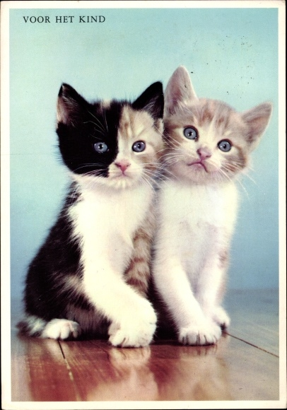 Ak Zwei Kätzchen, Hauskatzen, Voor het Kind
