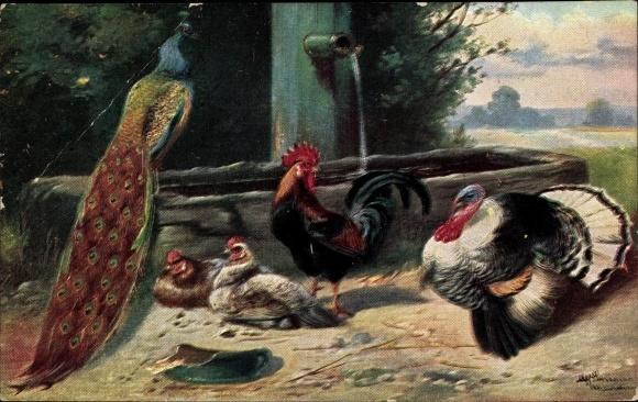 Künstler Ak Schönian, Alfred, Hühner, Pfau, Truthahn
