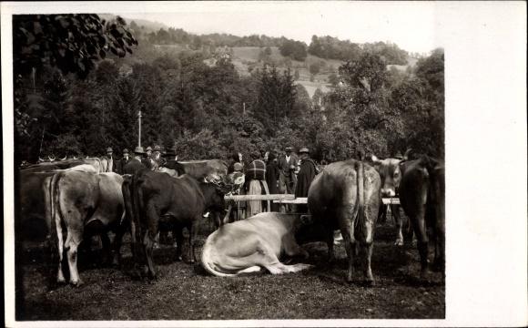 Ak Elsaß Lothringen, Kühe auf einem Viehmarkt, Besucher