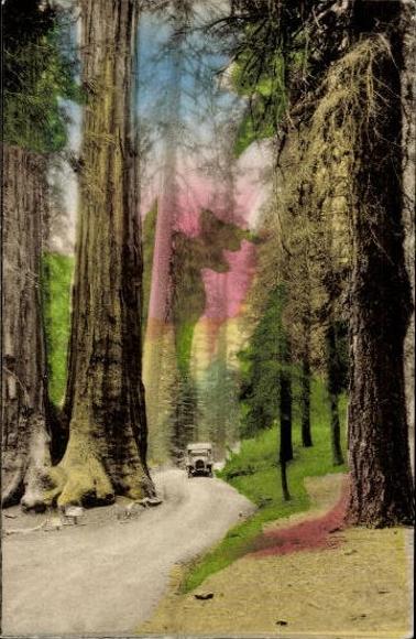 10 alte Ak Landschaften und Pflanzen in Kalifornien, diverse Motive