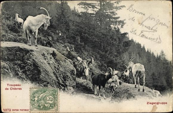 Ak Troupeau de Chèvres, Ziegengruppe, Ziegen an einem Berghang