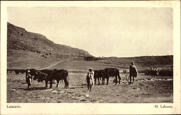 Ak Lesotho, Labours, Kuhgespann, Feldarbeiter, Société des Missions Évangéliques