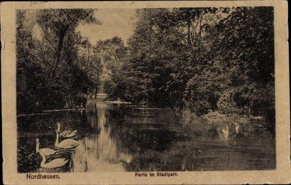 Ak Nordhausen in Thüringen, Partie im Stadtpark, Schwäne auf dem See
