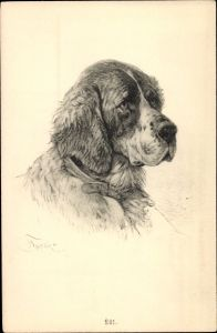 Künstler Ak Bernhardiner, Hundeportrait, Kopfstudie