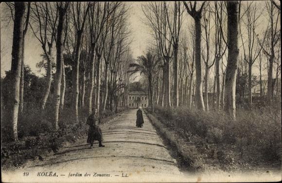 Ak Kolea Algerien, Jardin des Zouaves, Gartenanlagen, Allee, LL.