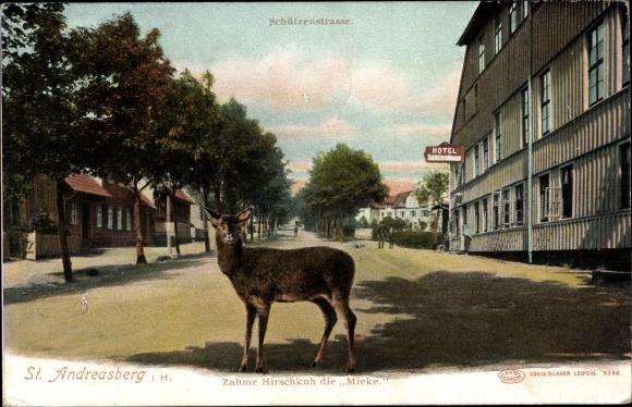 Ak St. Andreasberg Braunlage im Harz, Schützenstraße, Zahme Hirschkuh die Mieke