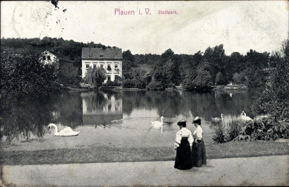 Ak Plauen im Vogtland, Partie im Stadtpark, Schwäne auf dem See