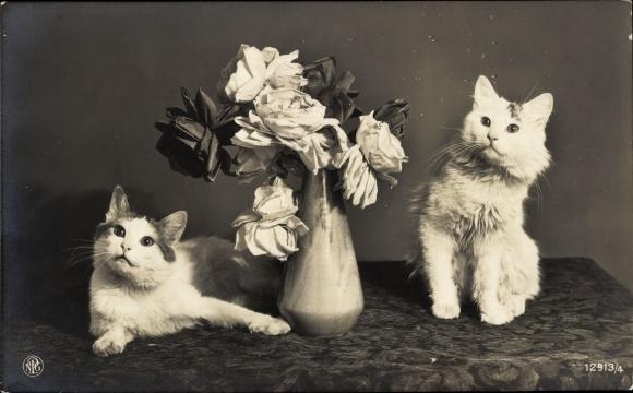 Ak Zwei Hauskatzen, Blumenvase, NPG 12913/4