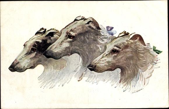Künstler Ak Drei Windhunde, Kopfstudien