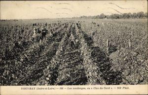 Ak Vouvray Indre et Loire, Les vendanges au Clos du Gard, Weinlese, Weinberg