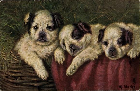 Künstler Ak Stocks, M., Drei schwarz weiße Hundewelpen in einem Korb