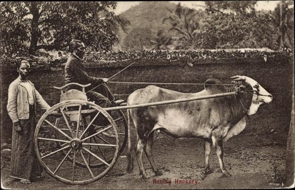 Ak Sri Lanka Ceylon, Racing Hackery, zwei Männer mit einem Rinderwagen 0