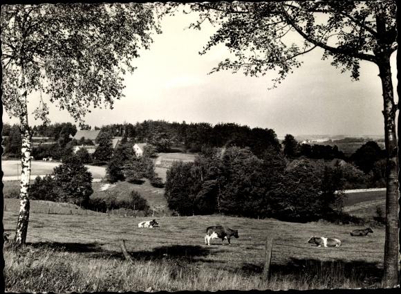 Ak Lengerich im Tecklenburger Land Westfalen, Weidende Rinder, Landschaftsansicht 0