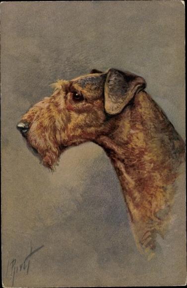 Künstler Ak Hundeportrait, Profilansicht von einem Terrier 0
