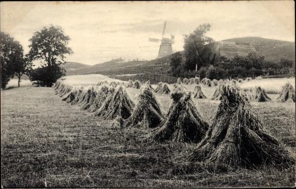 Ak Belgien, Blick über Felder zu einer Windmühle, Heuhaufen