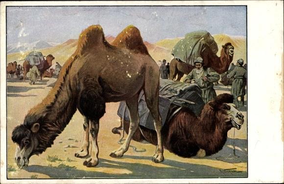 Künstler Ak Kamelkarawane in der Wüste, Meinholds Tierbilder, Volksschule