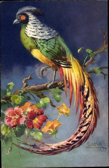 Künstler Ak Carlo, Paradiesvogel, Baumblüte, Blumen