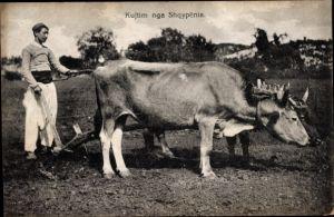 Ak Skopje Mazedonien, Ackerpflug, Rinder