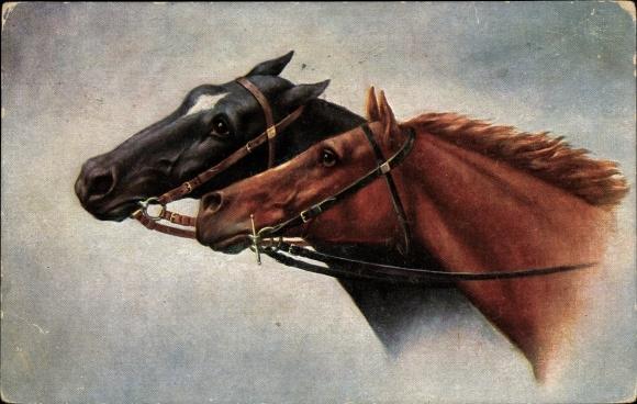 Künstler Ak Pferdeportrait, braunes und schwarzes Pferd mit Zaumzeug