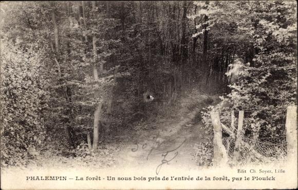 Ak Phalempin Nord, Un sous bois pris de l'entrée de la forêt, par le Plouick