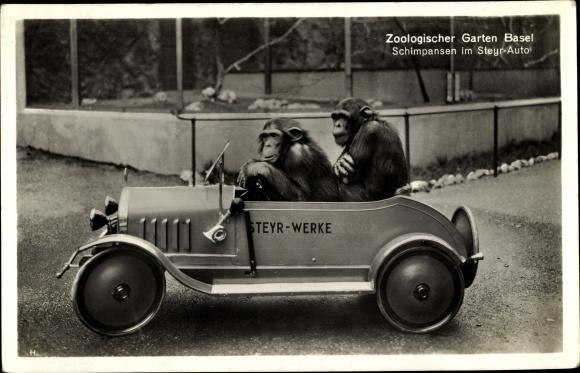 Ak Bâle Basel Stadt Schweiz, Zoologischer Garten, Schimpansen im Steyr Auto