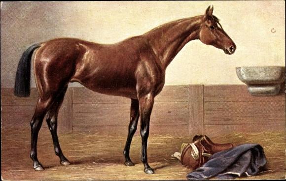 Künstler Ak Junges Pferd im Stall, Pferdesattel