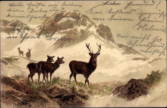 Litho Hirsche im Gebirge, Gebirgsszene, Meissner & Buch 1264, Von Bergeshöhn