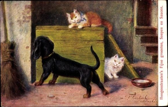 Künstler Ak Sperlich, Zwei Hauskatzen spielen mit einem Dackel
