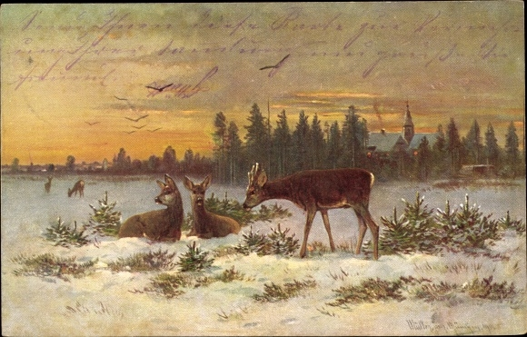 Künstler Ak Müller, M. jun., Haar und Federwild, Rehe zwischen Tannenbäumen im Schnee