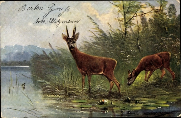 Künstler Ak Müller, M. jun., Zwei Rehe trinken am Ufer, Seerosen, Gebirge