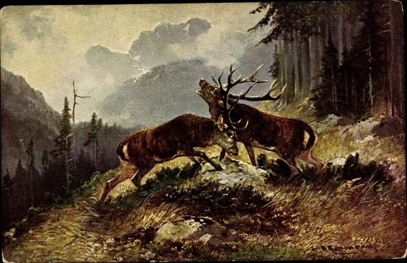 Künstler Ak Müller, M., Zwei Hirsche auf einer Waldlichtung beim Kampf, Brunft