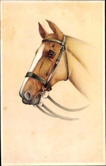 Künstler Ak Pferdeportrait, braunes Pferd mit weißer Blesse, Zaumzeug
